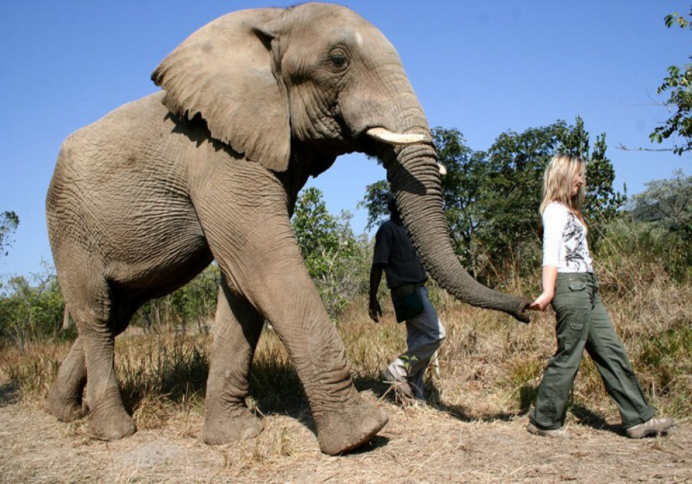 The Elephant Sanctuary - Hartebeespoort - 2 Nights - Self Drive